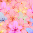 Multicolored Lily Flowers — Stock Photo