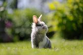 Cute Fluffy Rabbit Outdoors on Green Grass — Stock Photo