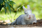 Cute Funny Rabbit Outdoors Lying on the Ground — Stock Photo