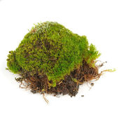 Clump of Green Moss Isolated on White Background — Stock Photo