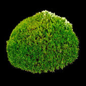 Green Moss on Black Background — Stock Photo