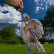 Chicken Stretching for Food in Hand — Stock Photo #39595879