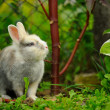 Stock Photo: Cute Rabbit in Summer Garden