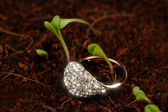 Gold Ring with Cubic Zirconia (CZ) on the Ground with Green Plants — Stock Photo