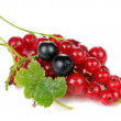 Red and Blackcurrants with Green Leaves Isolated on White Background — Stock Photo #46078323