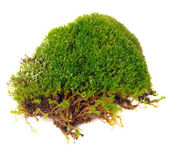 Clump of Moss Close-Up Isolated on White Background — Stock Photo