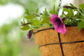 Pink Petunia Flowers in Basket — Stock Photo