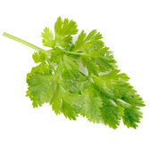 Green Celery Leaves Isolated on White Background — Stock Photo