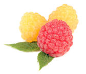 Red and Yellow Raspberry Isolated on White Background — Stock Photo