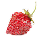 Red Wild Strawberry Isolated on White Background — Stock Photo