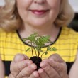 Closeup elderly woman holding plant sprout — Stock Photo