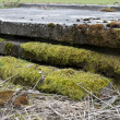 Moss on stone - Stock Photo