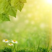 Základy zelené trávy — Stock fotografie