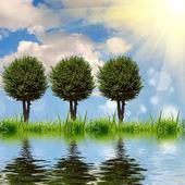 Groen gras met de wolken — Stockfoto