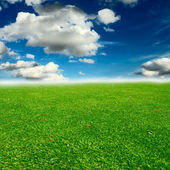 Green field with blue sky — Stock Photo