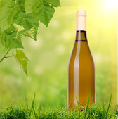 White wine on grass background — Stock Photo