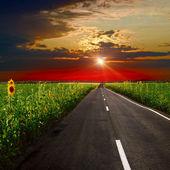 Strada asfaltata al tramonto — Foto Stock