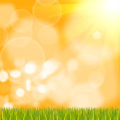 Green grass on background — Stock Photo