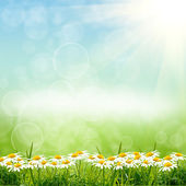 緑の natute の背景 — ストック写真
