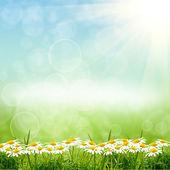 Zelený natute pozadí — Stock fotografie