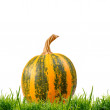 The yellow pumpkin — Stock Photo