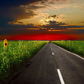 Asphalt road at sunset — Stockfoto