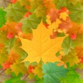 żółte tło jesień — Zdjęcie stockowe