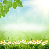 Green natute background — Stock Photo