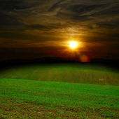 Groen veld bij de zonsondergang — Stockfoto