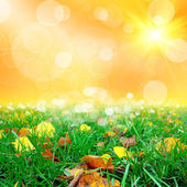 Green grass with thw leafs — Stock Photo