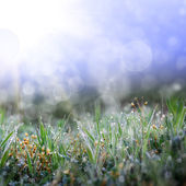 Green grass with the droops — Foto Stock