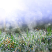Green grass with the droops — Stok fotoğraf