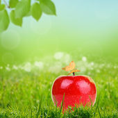 Red apple on green grass — Stock Photo