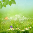 Green nature background with sky — Stock Photo #17412303