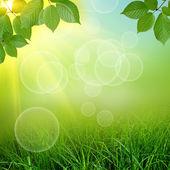 Gün batımında yeşil alan — Stok fotoğraf