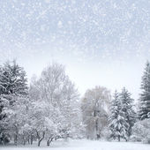 White christmas forest with snow — Foto Stock