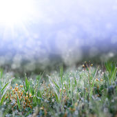 Green grass with the droops — Stock Photo