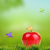 červené jablko na zelené trávě — Stock fotografie