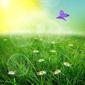 зеленый natute фон — Стоковое фото