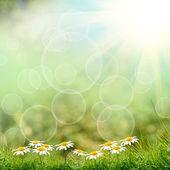 Grönt gräs med på grön bakgrund — Stockfoto