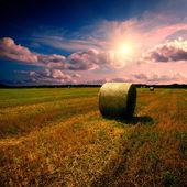 Fardos de palha no campo — Foto Stock