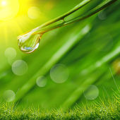 Water drops on the green grass — Foto Stock