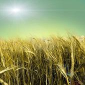 Prado verde sob o céu azul — Fotografia Stock
