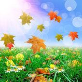 Thw ile yeşil çimen yaprakları — Stok fotoğraf