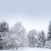 White christmas forest with snow — Stock Photo