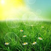 Yeşil natute arka plan — Stok fotoğraf