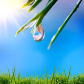 Morning nature background with drop — Stock Photo