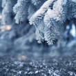 Snowy tree in the winter forest — Stock Photo