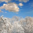 White winter forest with lot of snow - Stock Photo