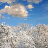 White winter forest with lot of snow — Stock Photo